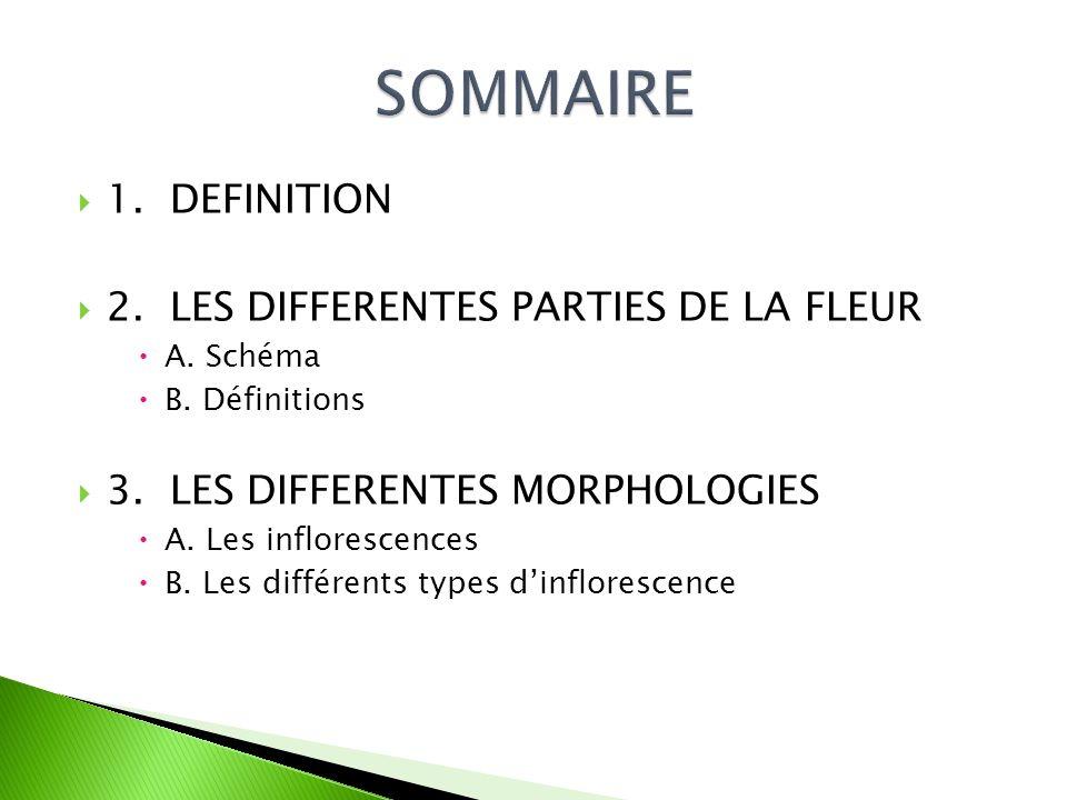 SOMMAIRE 1. DEFINITION 2. LES DIFFERENTES PARTIES DE LA FLEUR