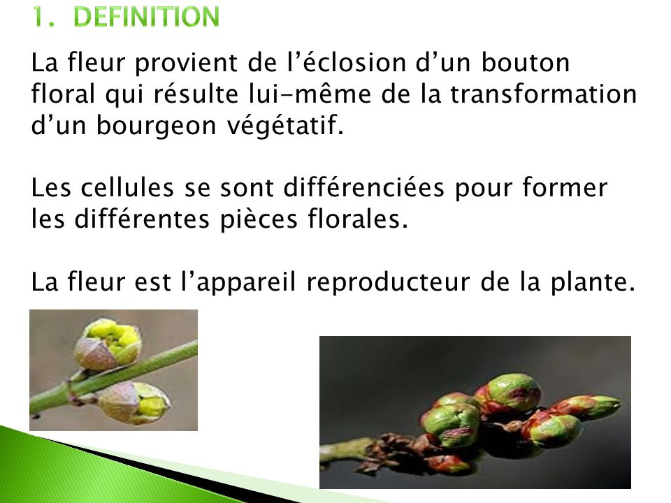 La fleur est l'appareil reproducteur de la plante.