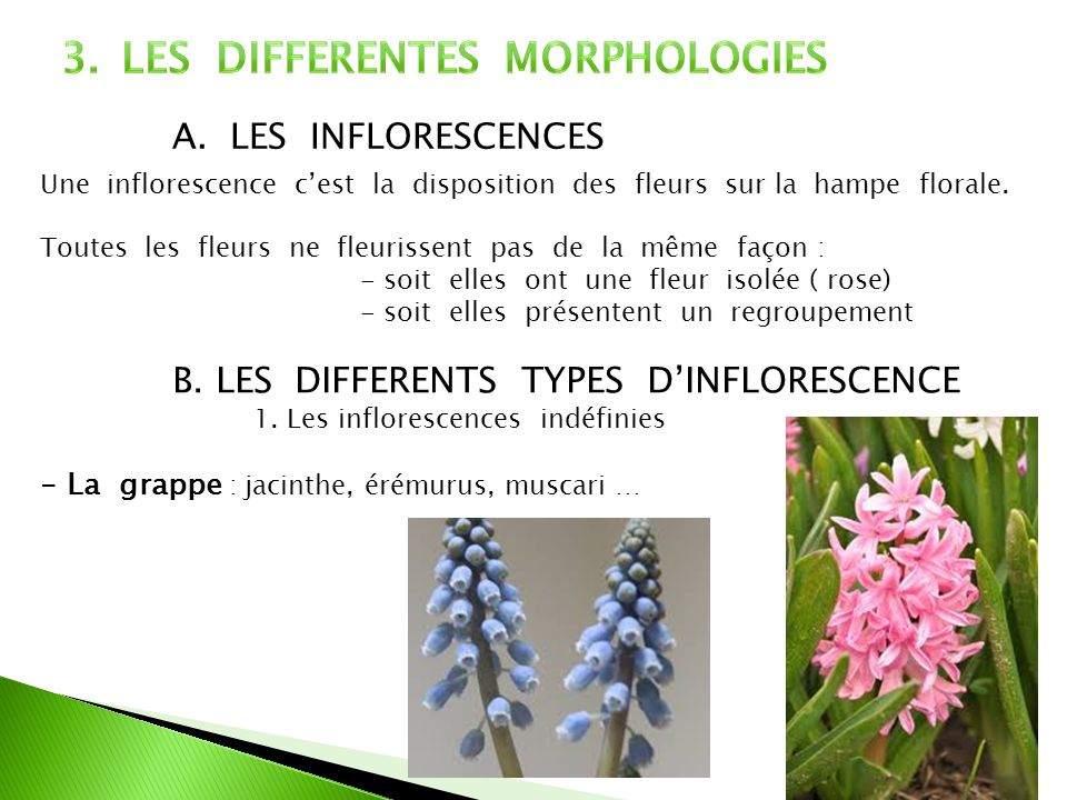 LES DIFFERENTES MORPHOLOGIES