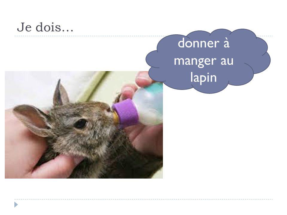 donner à manger au lapin