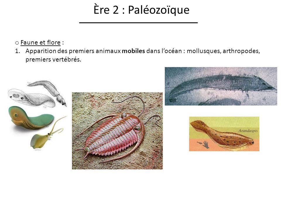 Ère 2 : Paléozoïque Faune et flore :