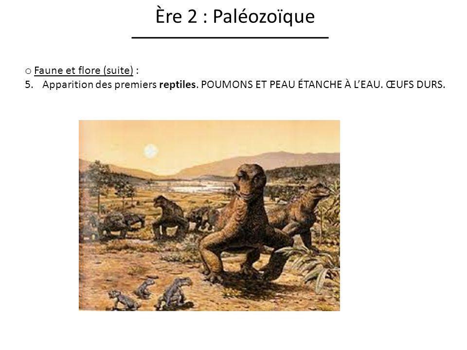 Ère 2 : Paléozoïque Faune et flore (suite) :