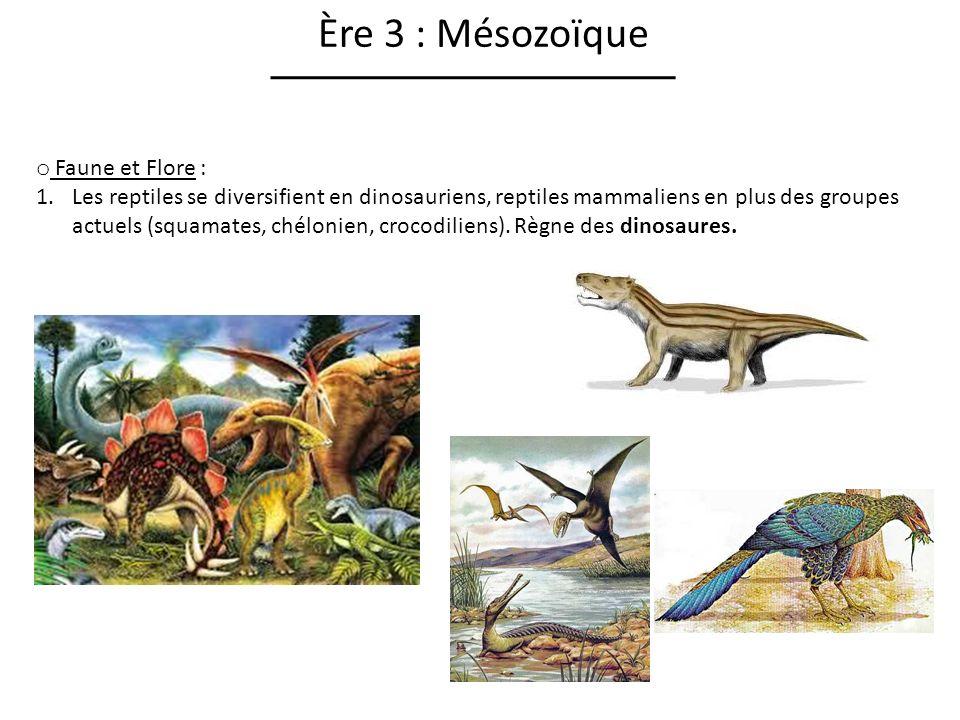 Ère 3 : Mésozoïque Faune et Flore :