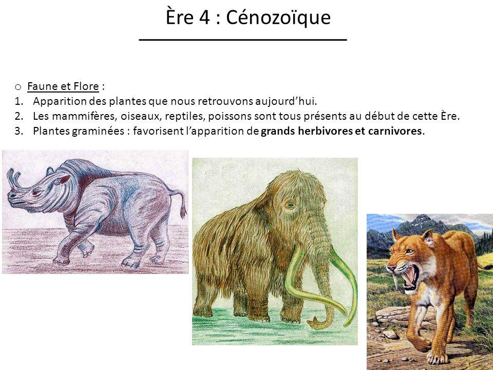 Ère 4 : Cénozoïque Faune et Flore :