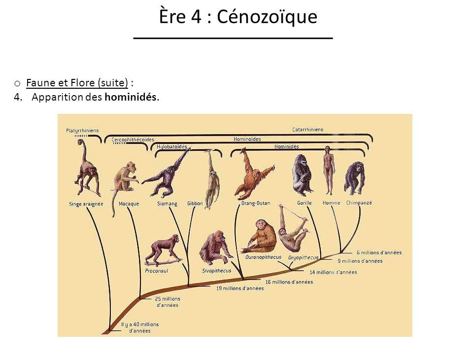 Ère 4 : Cénozoïque Faune et Flore (suite) : Apparition des hominidés.
