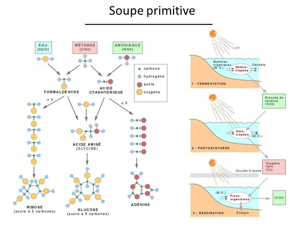 Soupe primitive