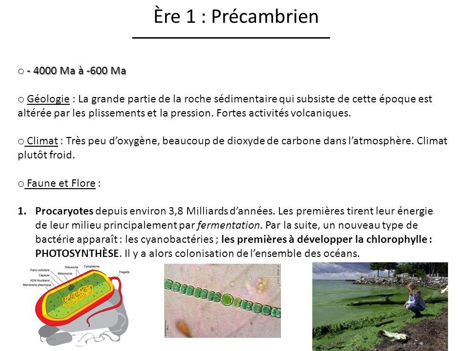 Ère 1 : Précambrien - 4000 Ma à -600 Ma