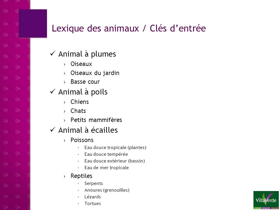 Lexique des animaux / Clés d'entrée