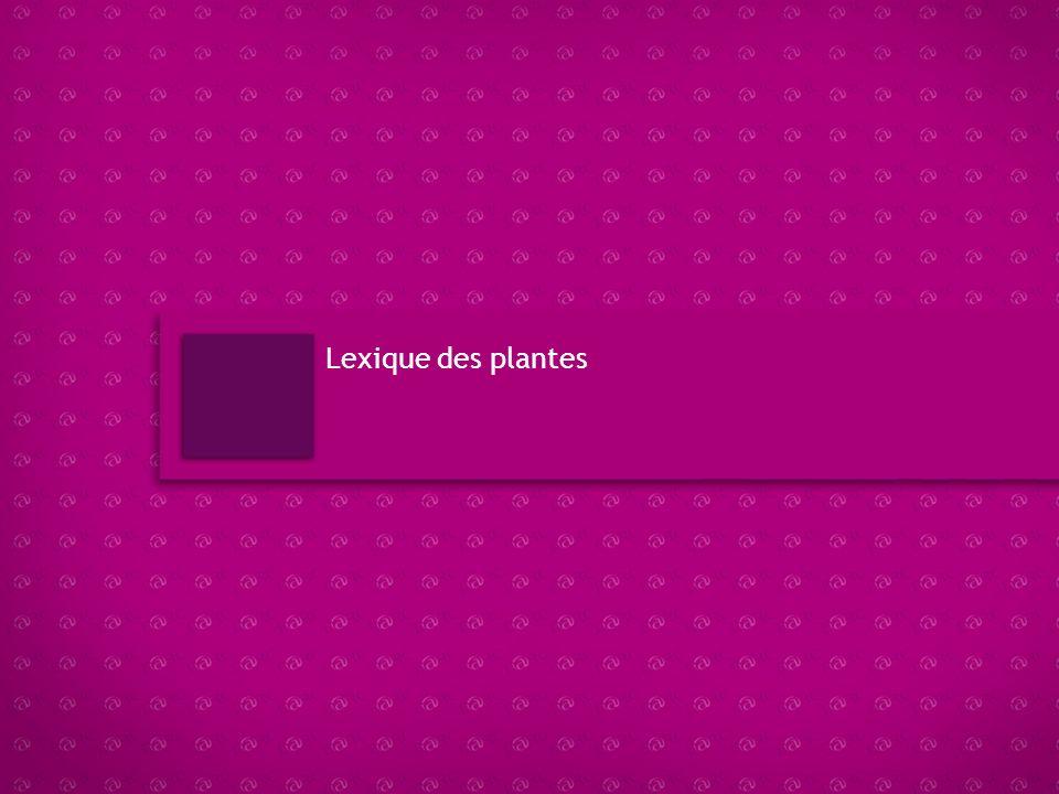 Lexique des plantes