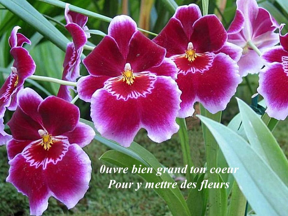 0uvre bien grand ton coeur Pour y mettre des fleurs