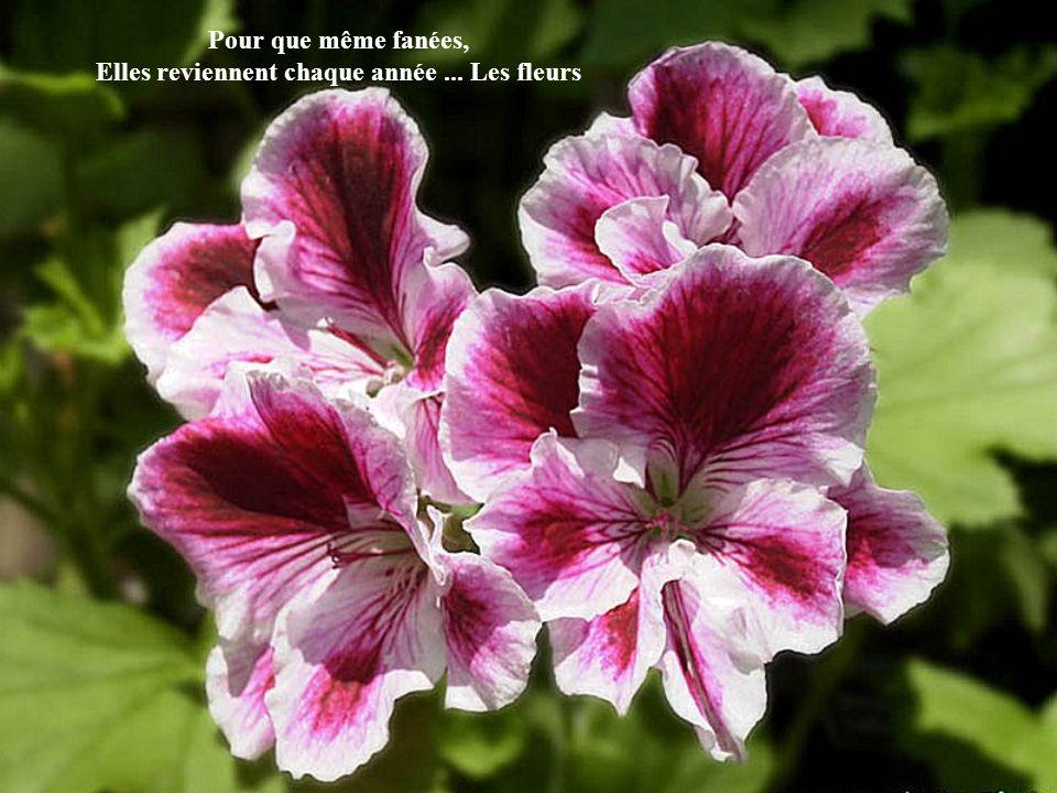Pour que même fanées, Elles reviennent chaque année ... Les fleurs