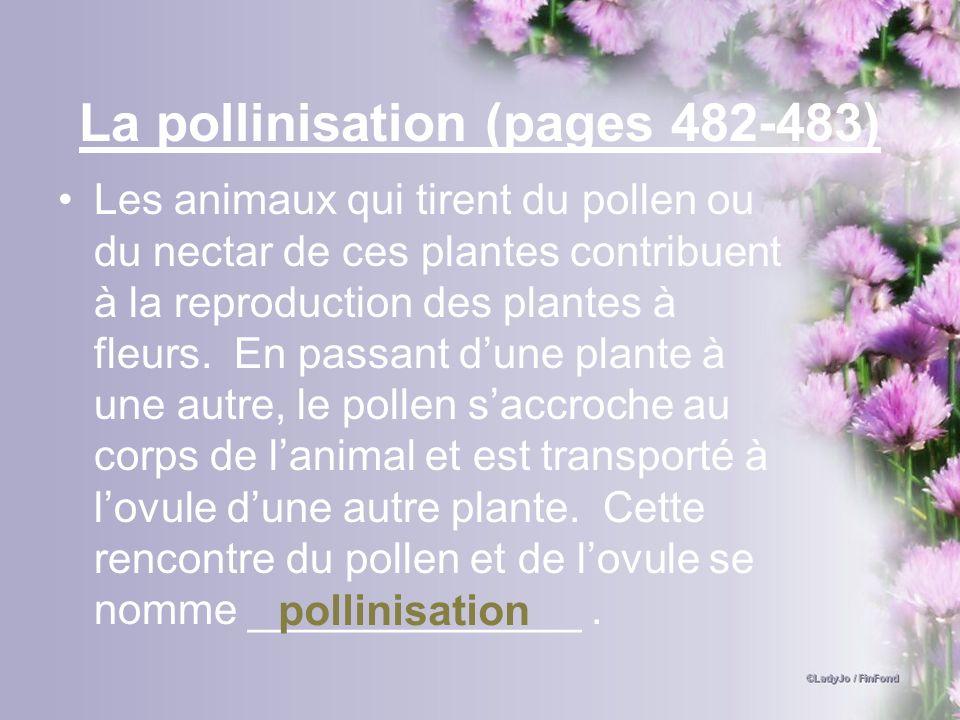 La pollinisation (pages 482-483)