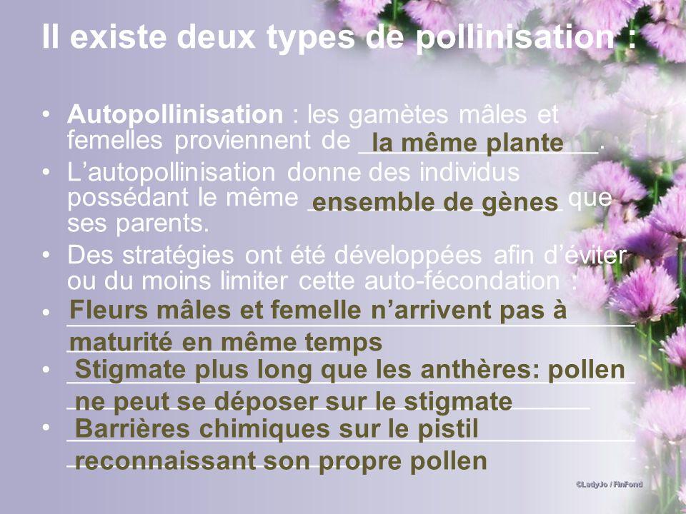 Il existe deux types de pollinisation :
