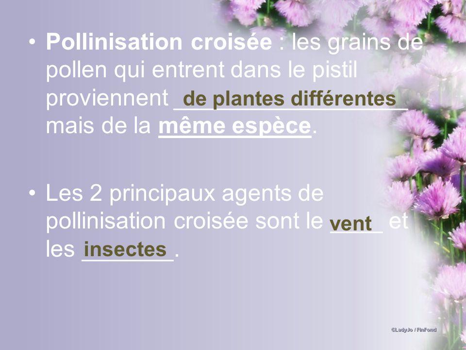 Pollinisation croisée : les grains de pollen qui entrent dans le pistil proviennent __________________ mais de la même espèce.