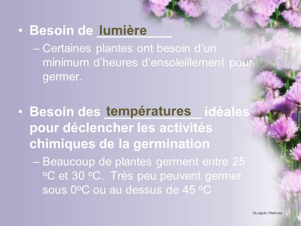 Besoin de __________ Certaines plantes ont besoin d'un minimum d'heures d'ensoleillement pour germer.