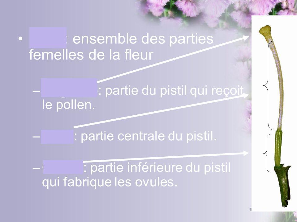 Pistil: ensemble des parties femelles de la fleur