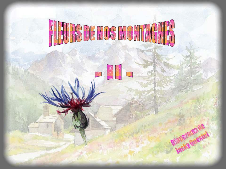 FLEURS DE NOS MONTAGNES