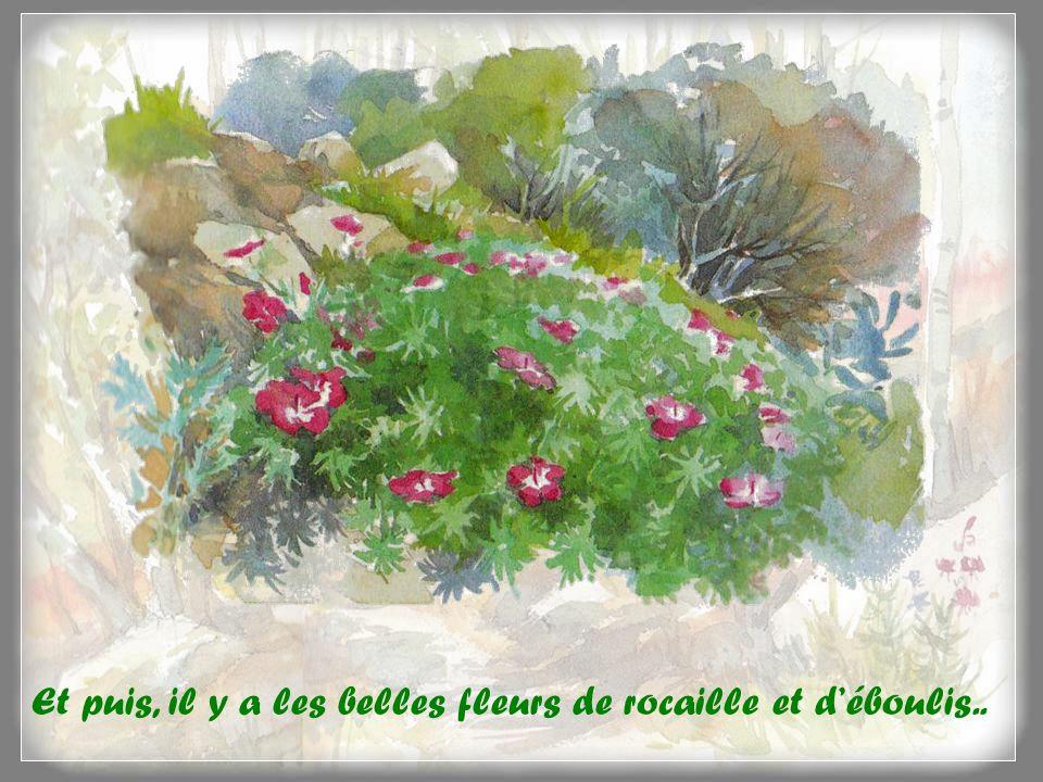 Et puis, il y a les belles fleurs de rocaille et d'éboulis..