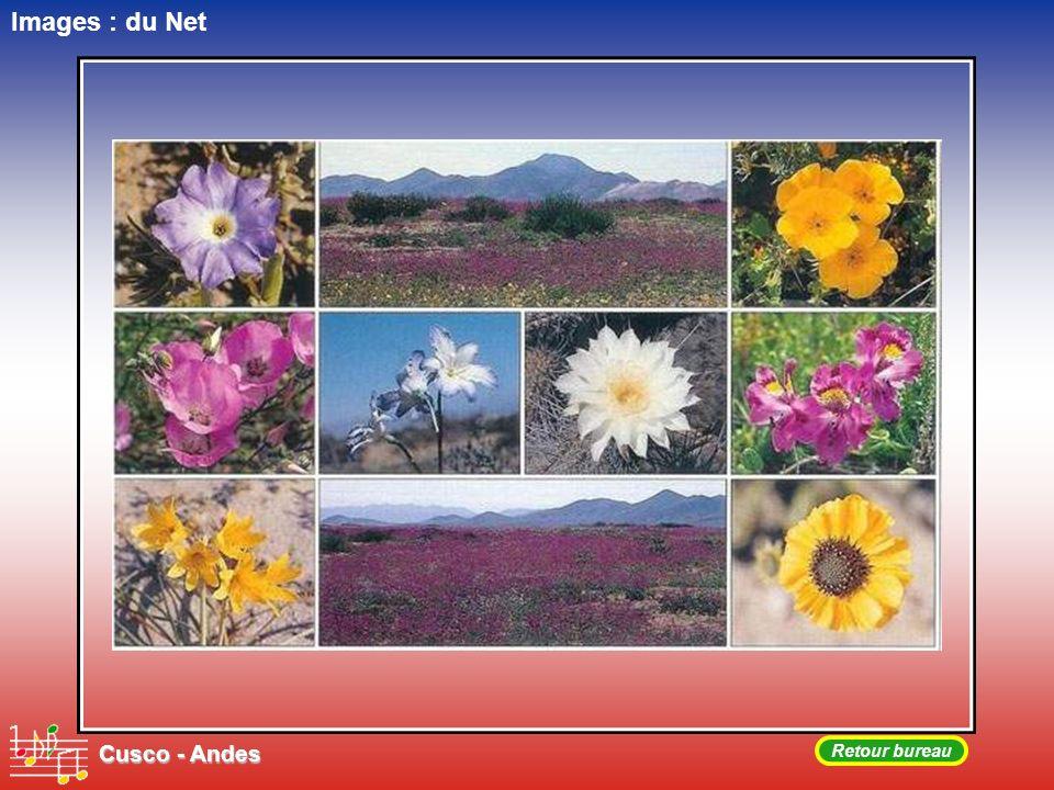 Images : du Net Cusco - Andes Retour bureau