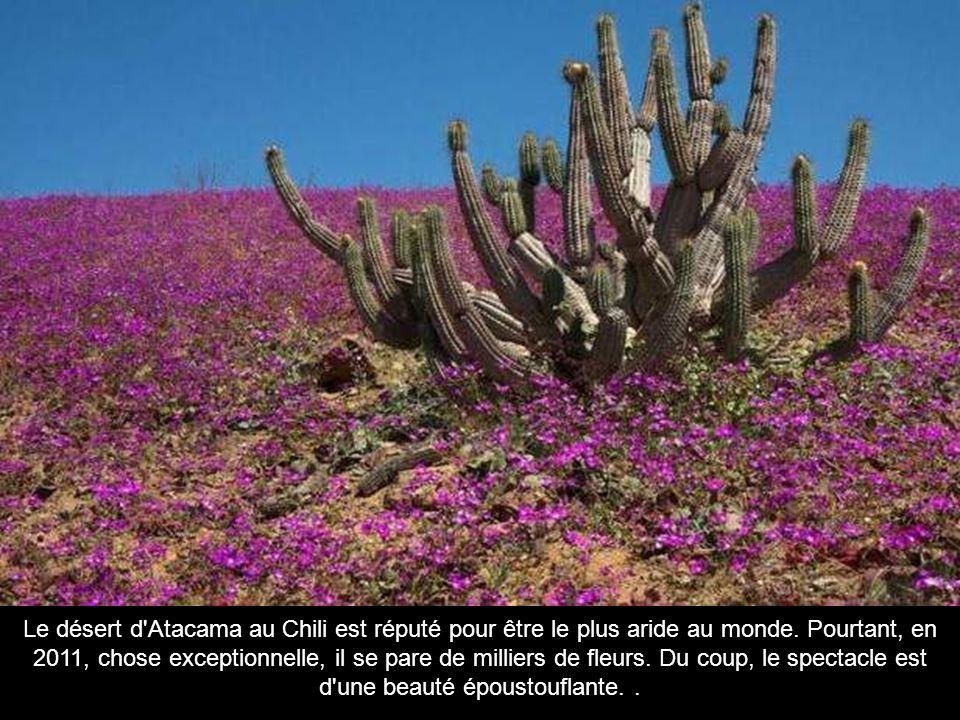 Le désert d Atacama au Chili est réputé pour être le plus aride au monde.