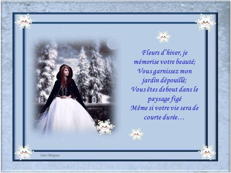 Fleurs d'hiver, je mémorise votre beauté;