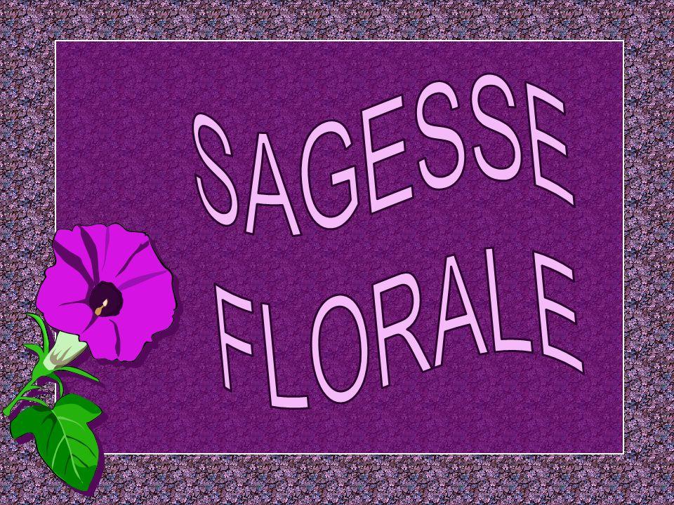 SAGESSE FLORALE
