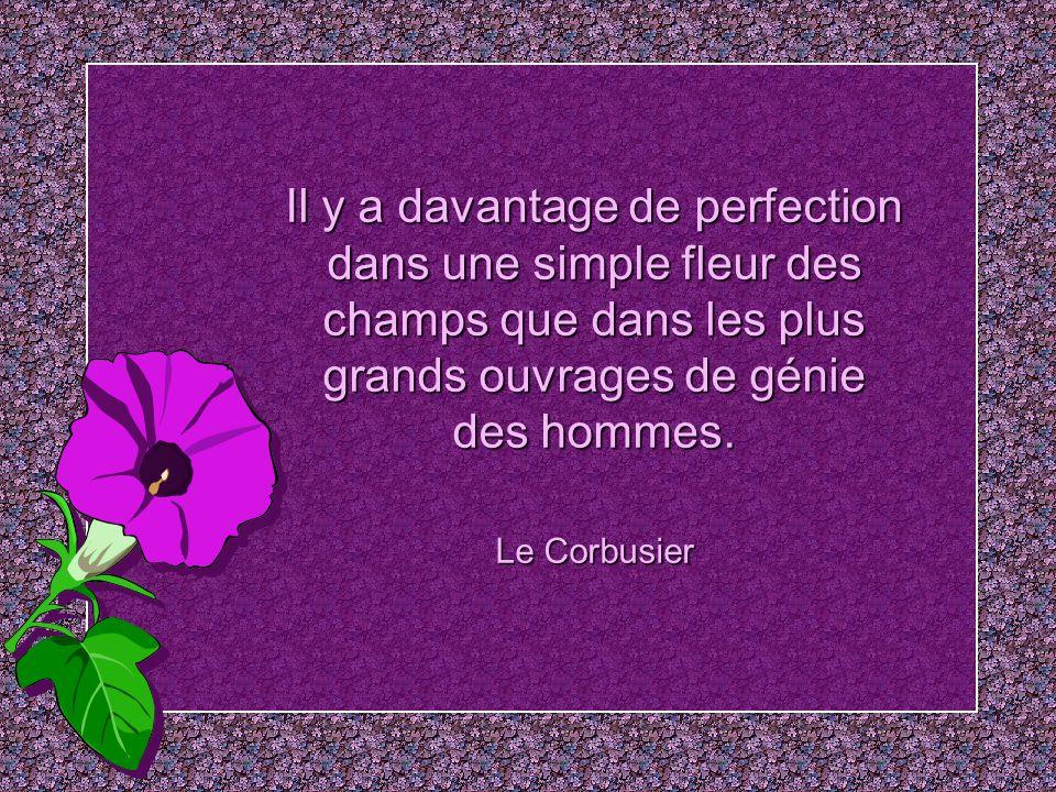 Il y a davantage de perfection dans une simple fleur des champs que dans les plus grands ouvrages de génie des hommes.