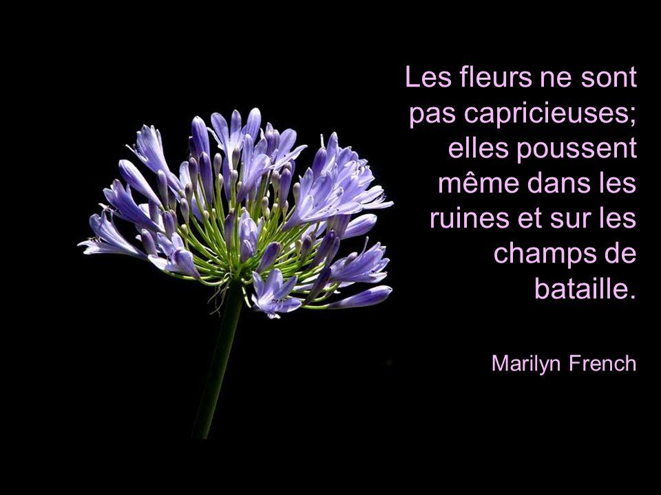 Les fleurs ne sont pas capricieuses; elles poussent même dans les ruines et sur les champs de bataille.