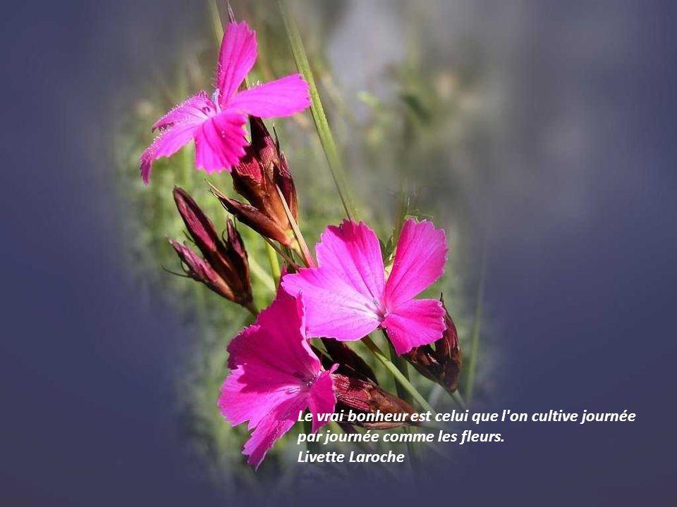 Le vrai bonheur est celui que l on cultive journée