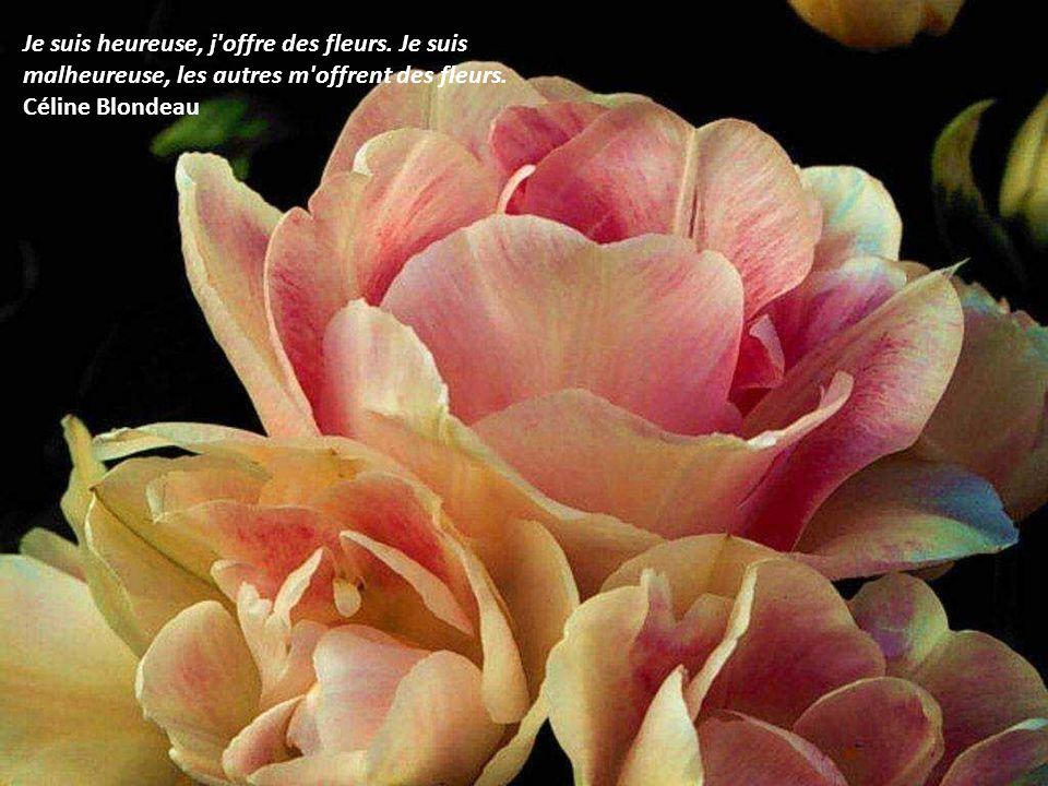 Un simple regard pos sur une fleur et voil une journ e for Offre des fleurs