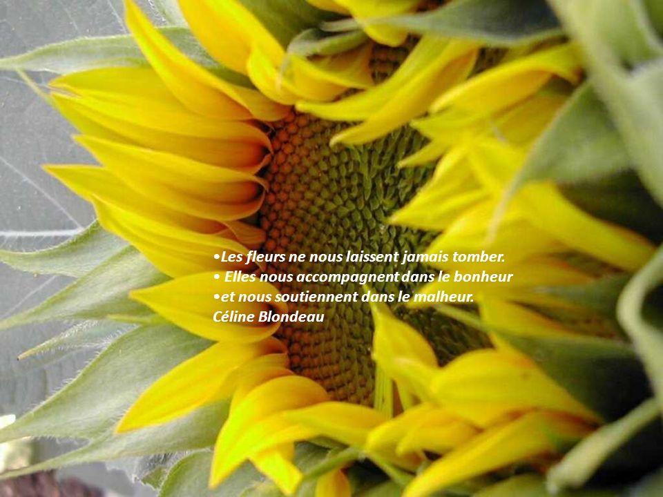 Les fleurs ne nous laissent jamais tomber.
