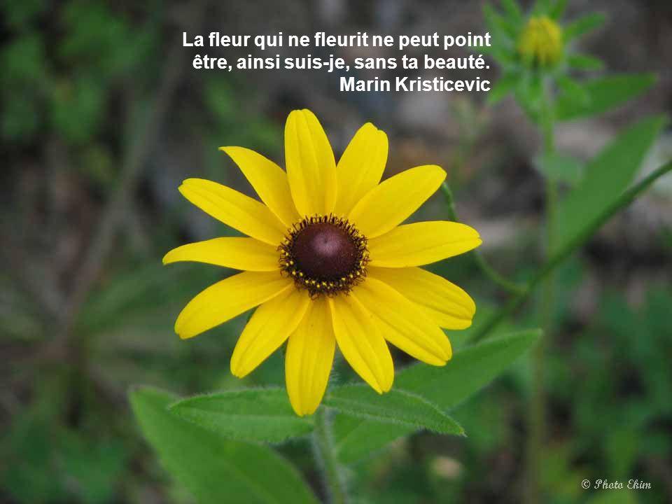 La fleur qui ne fleurit ne peut point être, ainsi suis-je, sans ta beauté. Marin Kristicevic