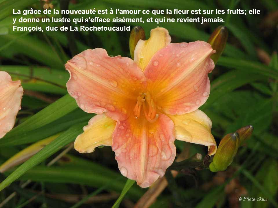 La grâce de la nouveauté est à l amour ce que la fleur est sur les fruits; elle y donne un lustre qui s efface aisément, et qui ne revient jamais.