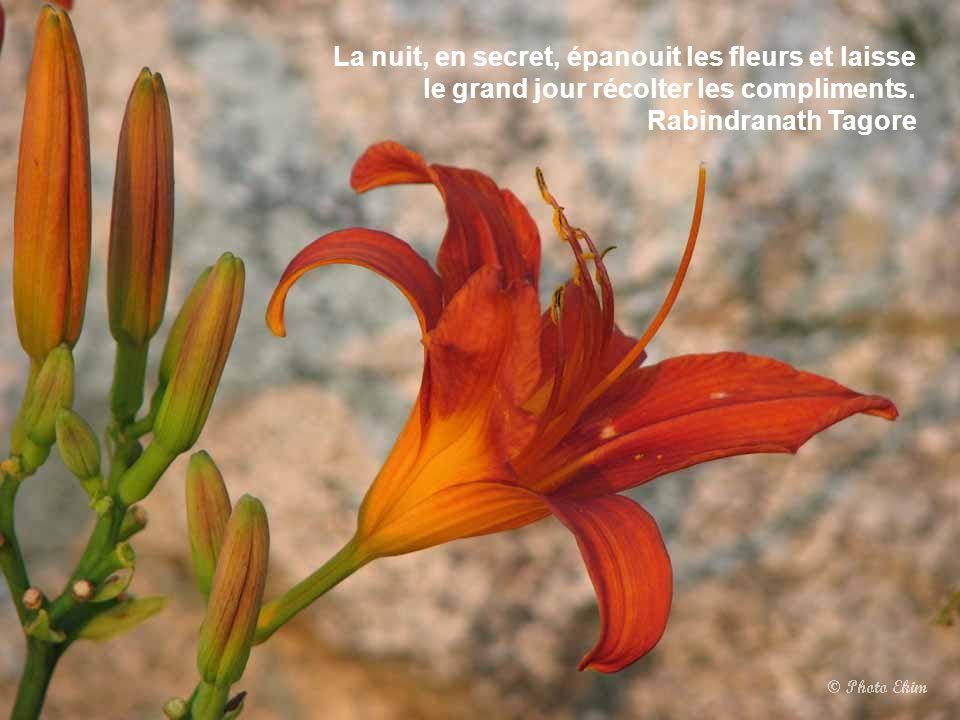 La nuit, en secret, épanouit les fleurs et laisse le grand jour récolter les compliments.