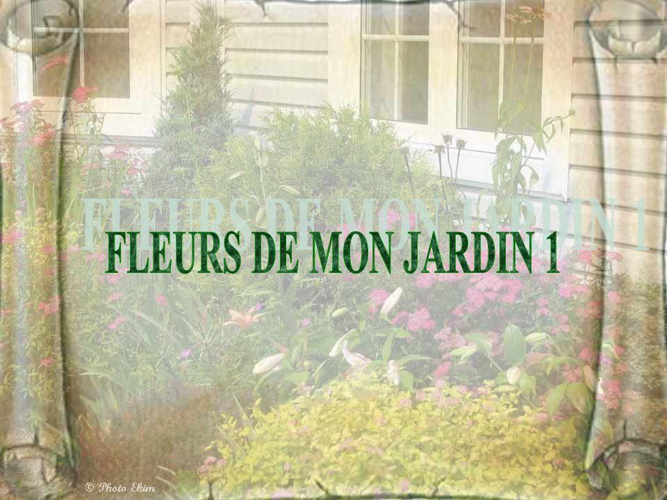 FLEURS DE MON JARDIN 1