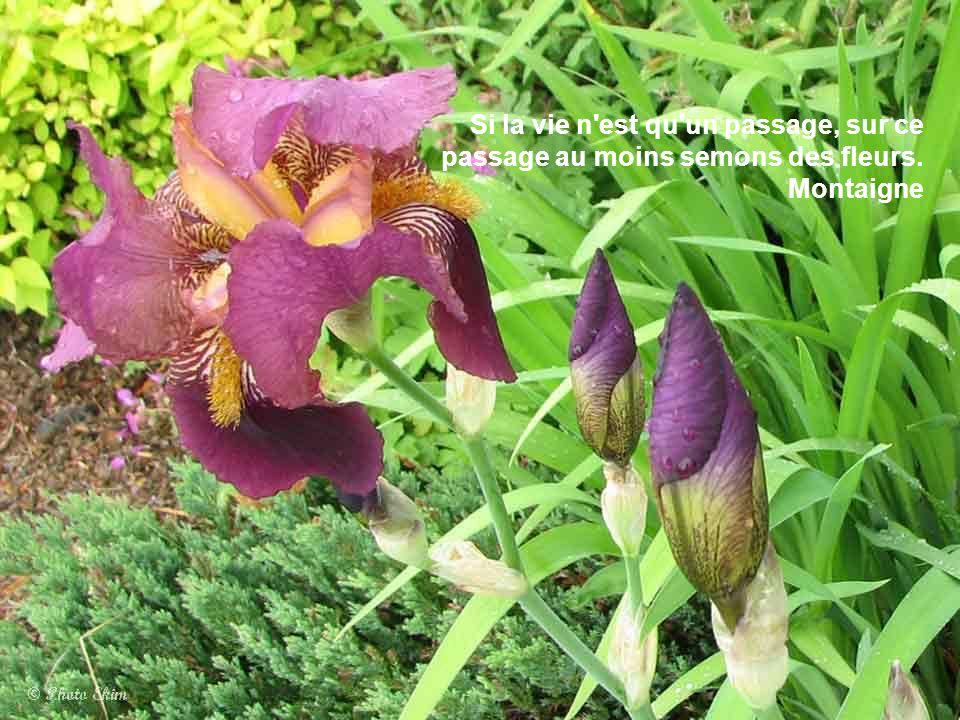 Si la vie n est qu un passage, sur ce passage au moins semons des fleurs. Montaigne