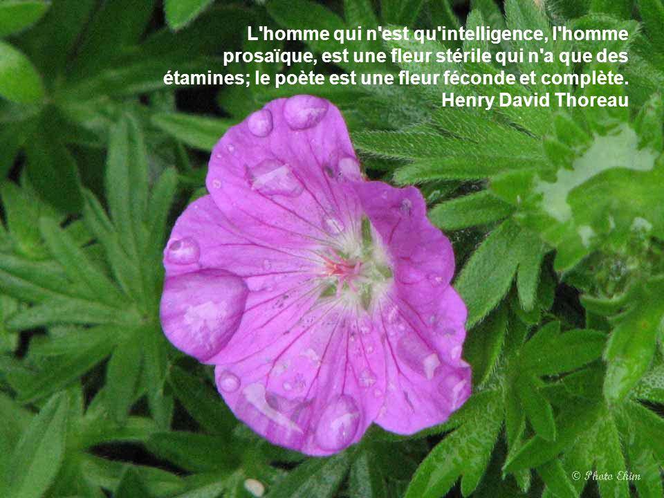L homme qui n est qu intelligence, l homme prosaïque, est une fleur stérile qui n a que des étamines; le poète est une fleur féconde et complète.