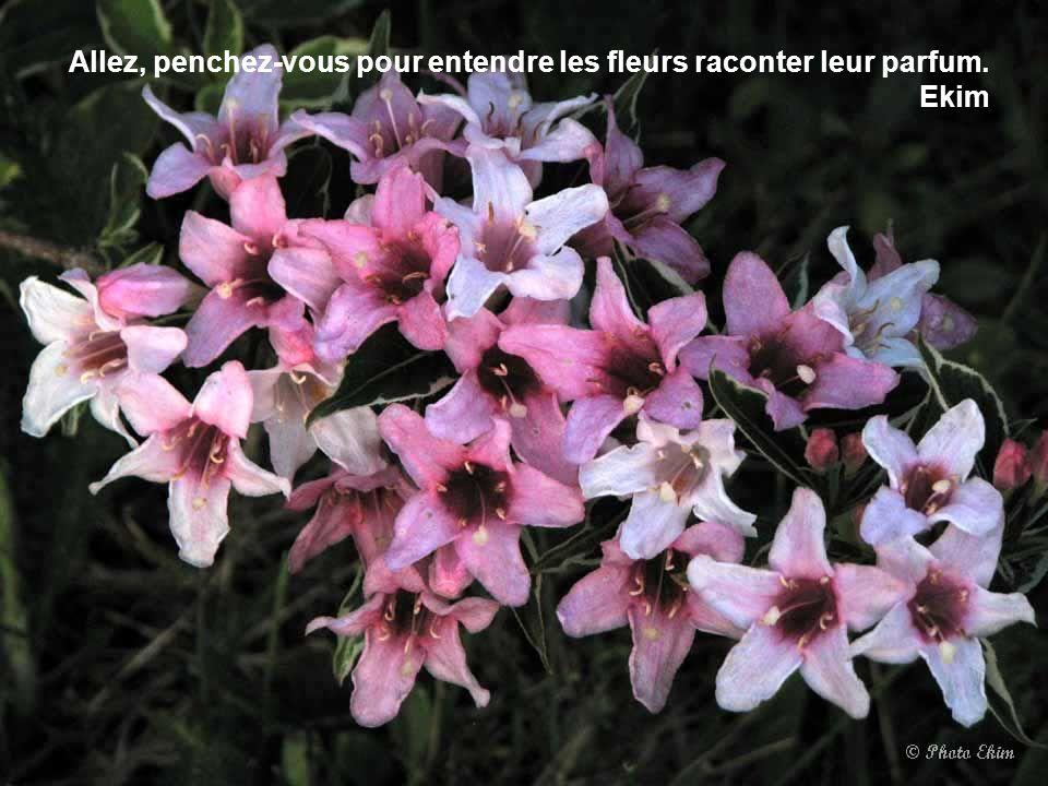 Allez, penchez-vous pour entendre les fleurs raconter leur parfum. Ekim
