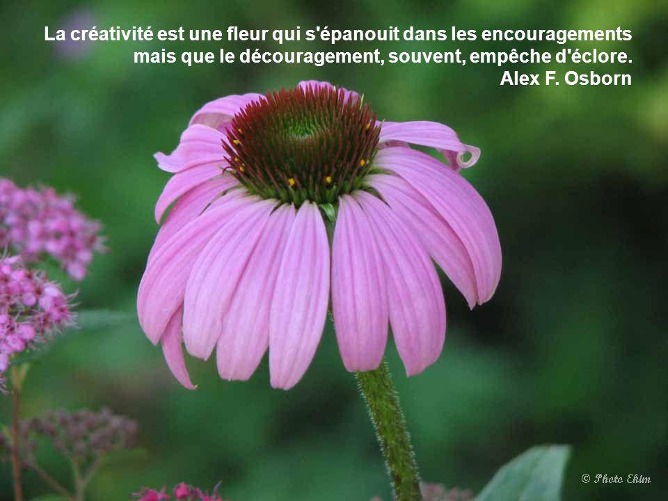 La créativité est une fleur qui s épanouit dans les encouragements mais que le découragement, souvent, empêche d éclore.