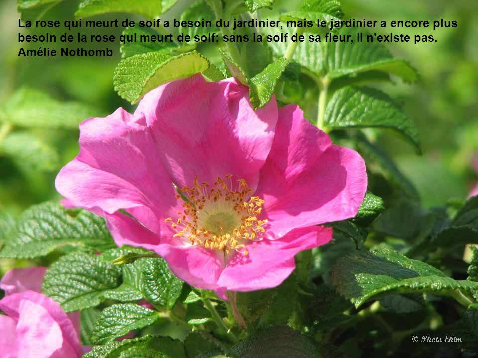 La rose qui meurt de soif a besoin du jardinier, mais le jardinier a encore plus besoin de la rose qui meurt de soif: sans la soif de sa fleur, il n existe pas.
