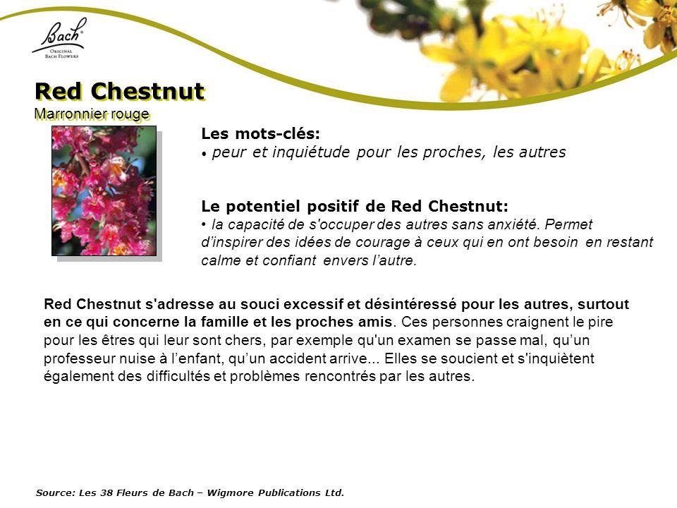 Red Chestnut Marronnier rouge Les mots-clés:
