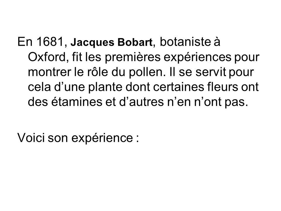 En 1681, Jacques Bobart, botaniste à Oxford, fit les premières expériences pour montrer le rôle du pollen. Il se servit pour cela d'une plante dont certaines fleurs ont des étamines et d'autres n'en n'ont pas.