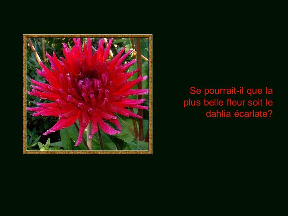 Se pourrait-il que la plus belle fleur soit le dahlia écarlate