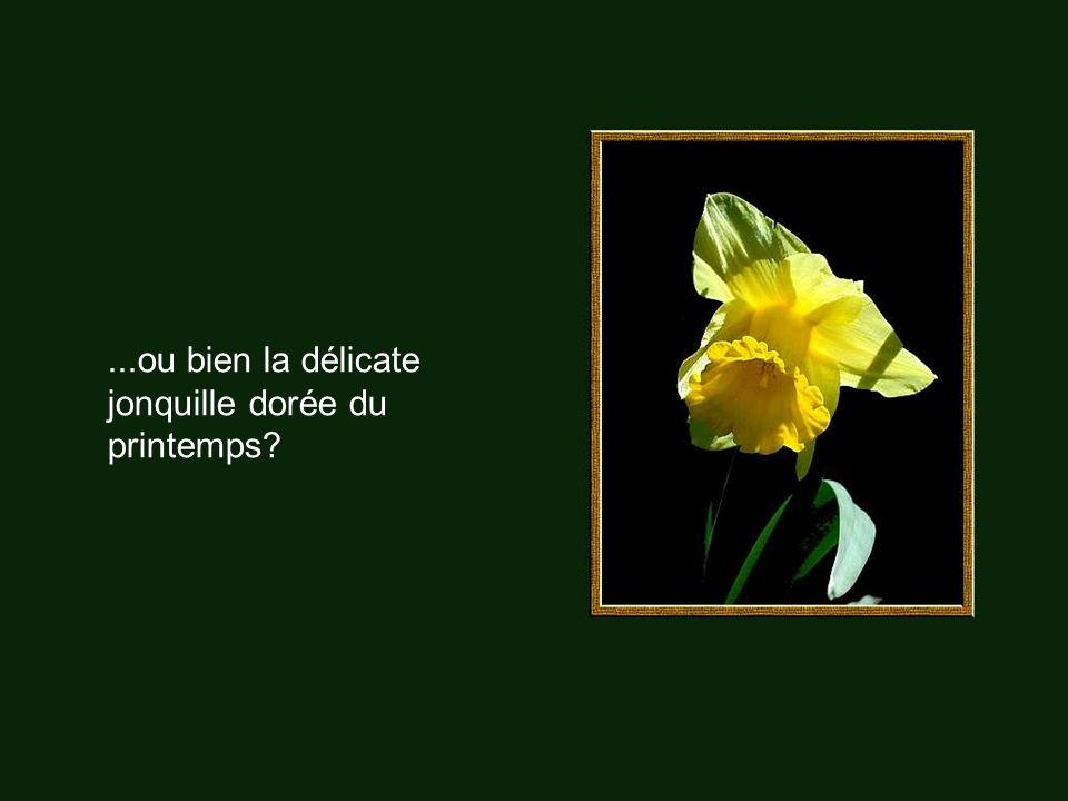 ...ou bien la délicate jonquille dorée du printemps