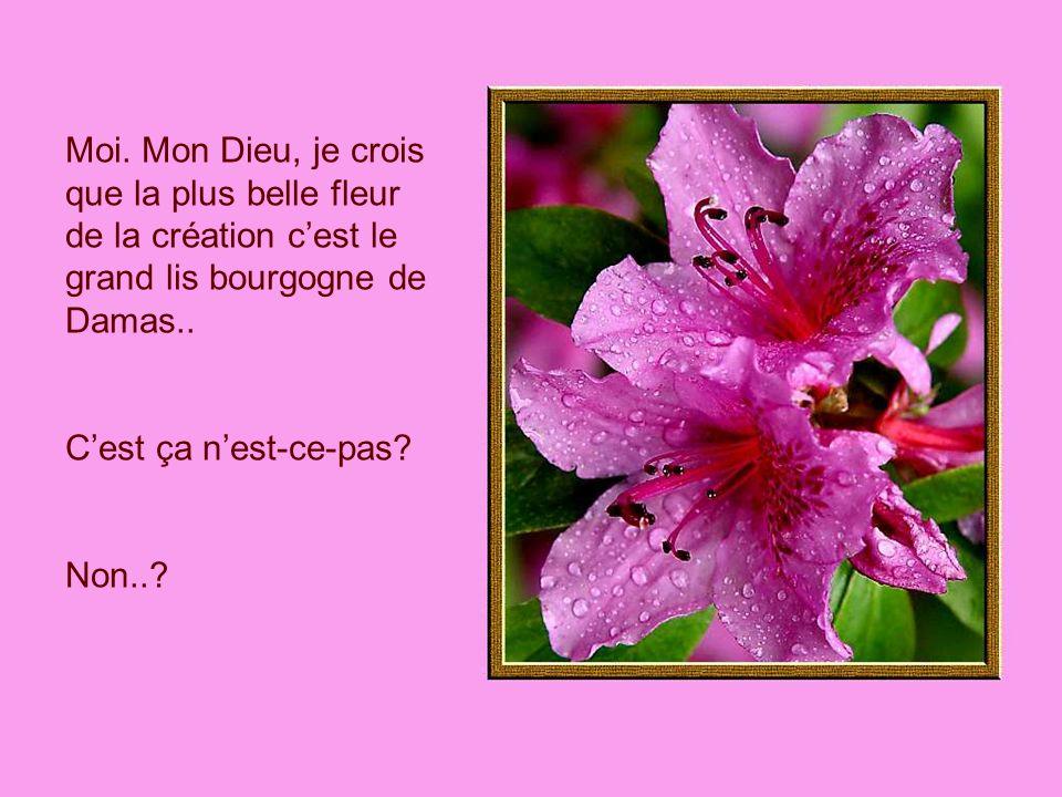 Moi. Mon Dieu, je crois que la plus belle fleur de la création c'est le grand lis bourgogne de Damas..