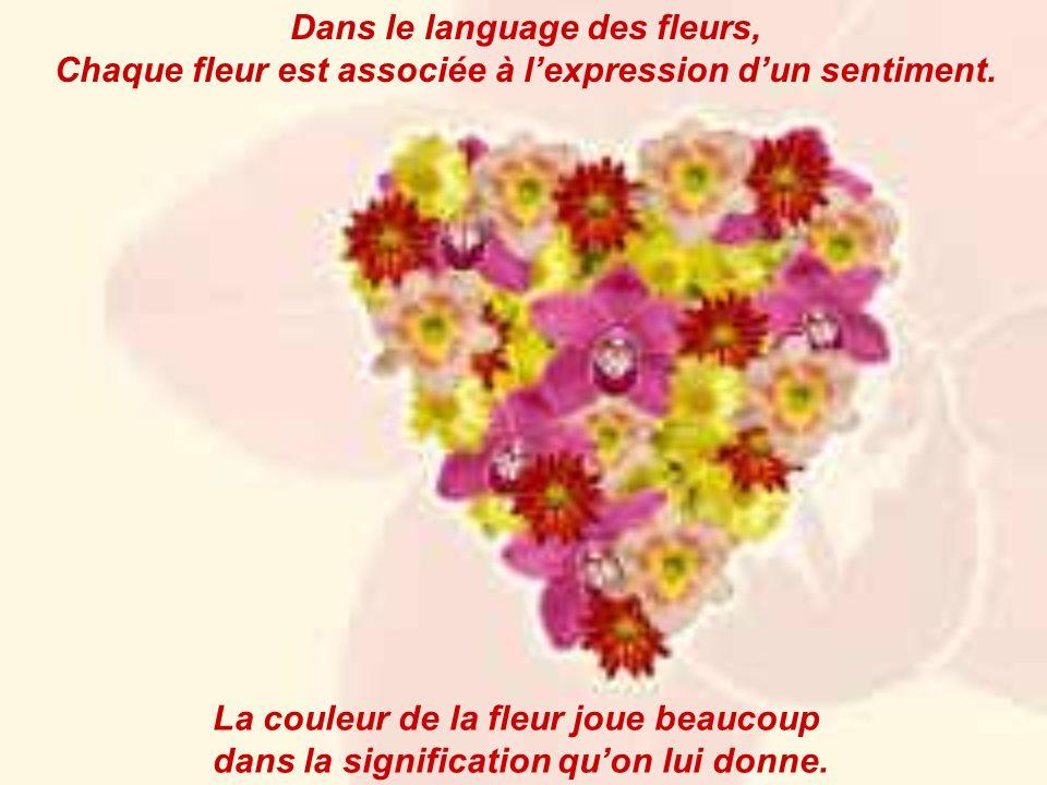 Dans le language des fleurs,