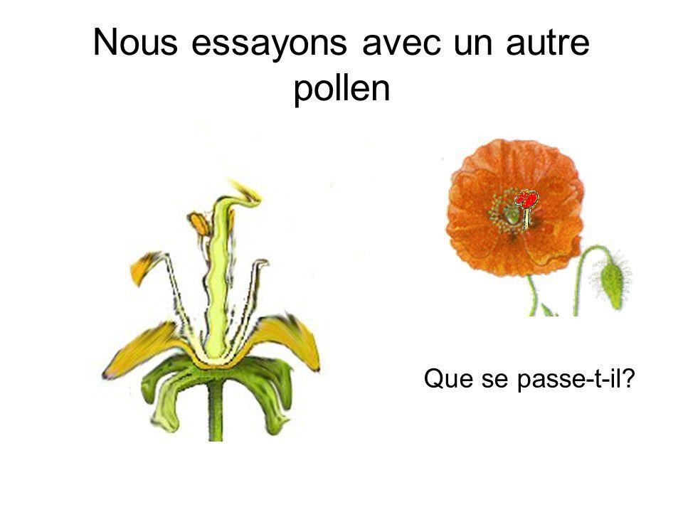 Nous essayons avec un autre pollen