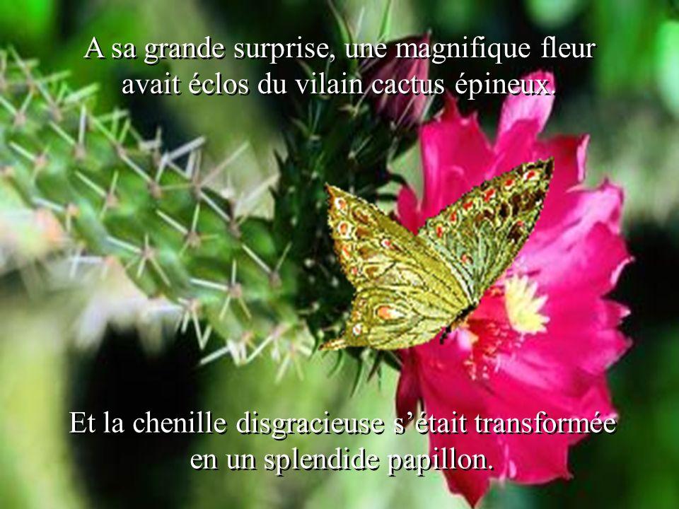 A sa grande surprise, une magnifique fleur avait éclos du vilain cactus épineux.