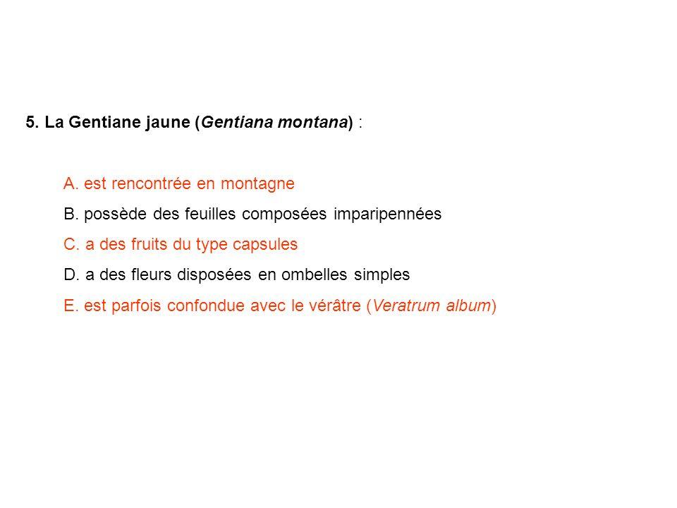 5. La Gentiane jaune (Gentiana montana) :