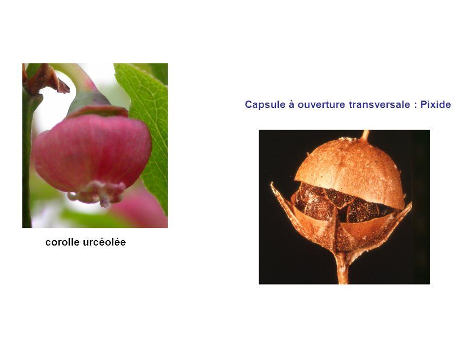 Capsule à ouverture transversale : Pixide